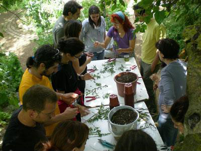 Workshop with medicinal and aromatic plants